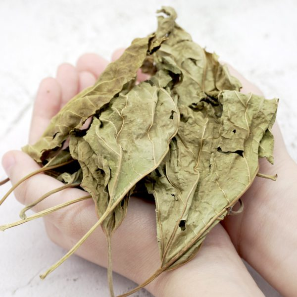 Malaysia Offer for Mulberry Leaf Tea Loose Leave Price 2020 桑叶茶